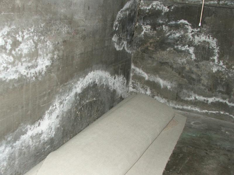 What does mold look like on walls